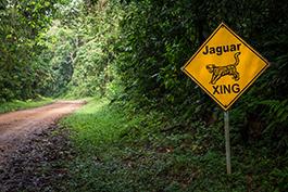 Rezerwat Jaguara