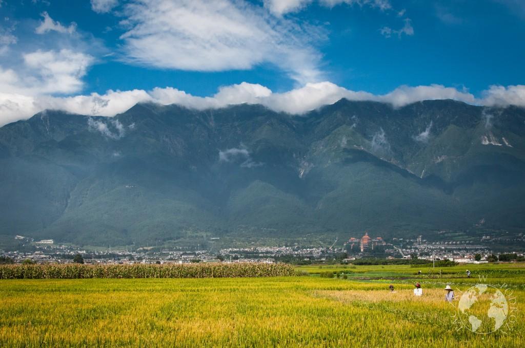Pola ryżowe, Dali, Junnan, Chiny