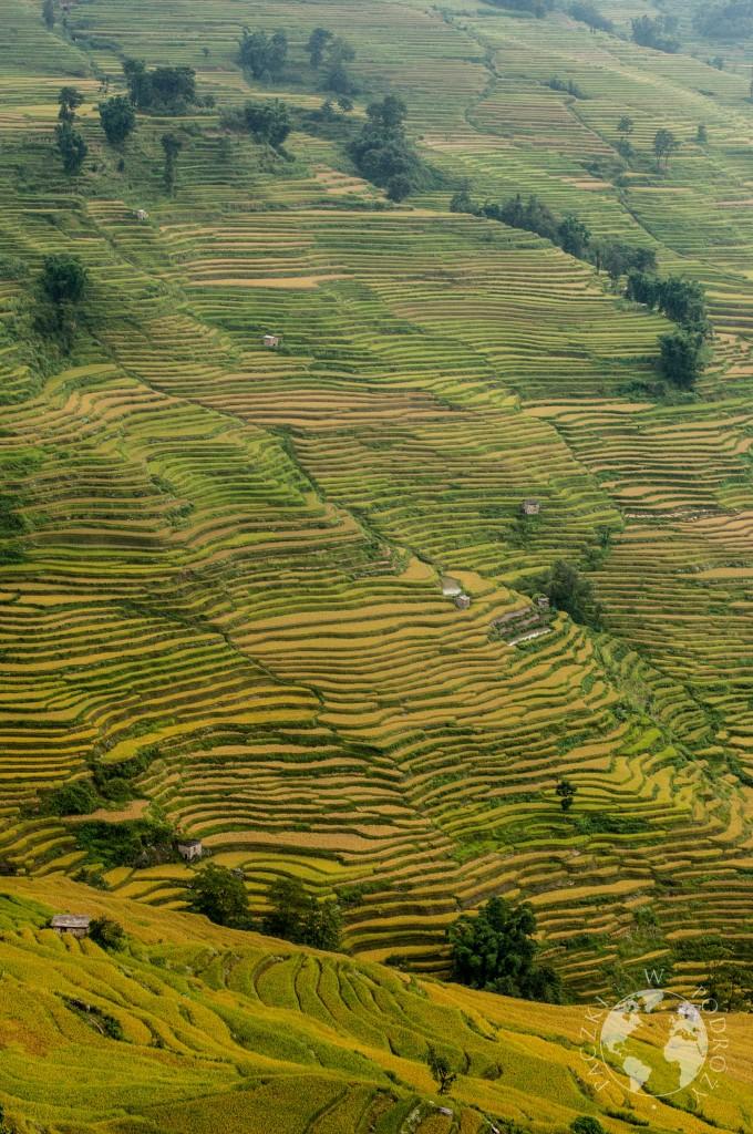 Tarasy ryżowe yuanyang, Chiny
