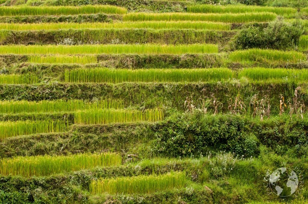 Tarasy ryżowe Chiny