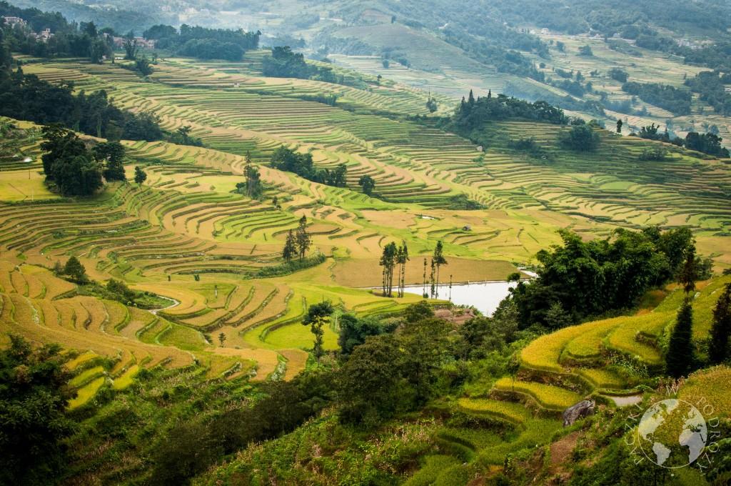 Najpiękniejsze tarasy ryżowe Yuanyang
