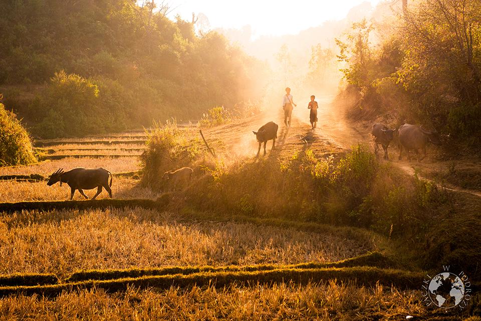 Powrót do domu, Stan Shan, Birma