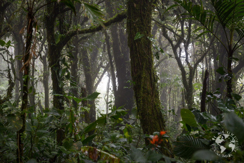 kostaryka-18