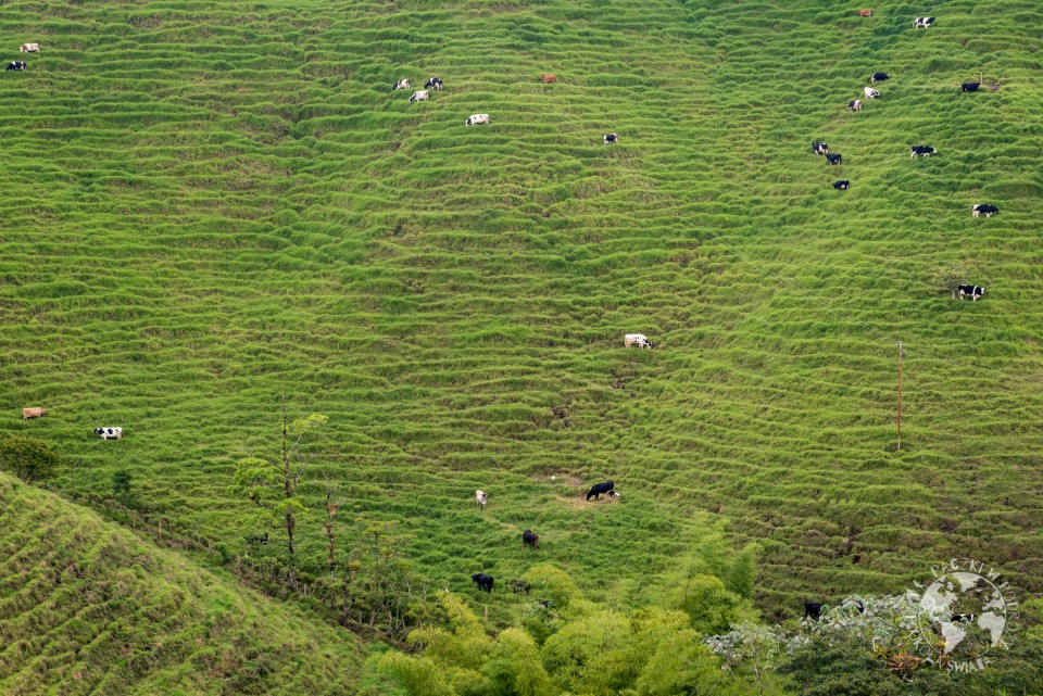 valle de cocora-4